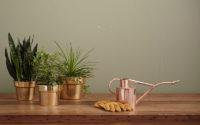 Imagen de Relación entre las plantas y la música - Flores para el hogar - Florilandia Express Floristería