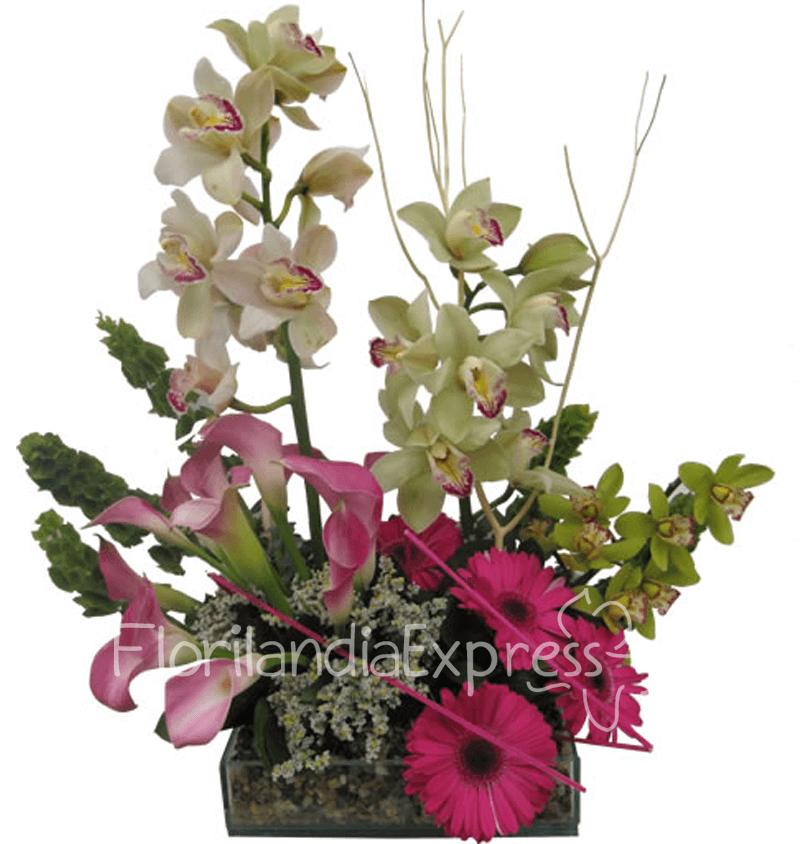 Imagen de Arreglo en Orquídeas Cartagena - Flores a domicilio bogotá - Floristerías Florilandia Express