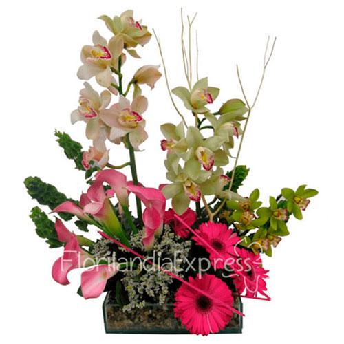 Imagen de Arreglo de Orquídeas Abejita a domicilio Colombia - Floristerías Florilandia Express en Bogotá