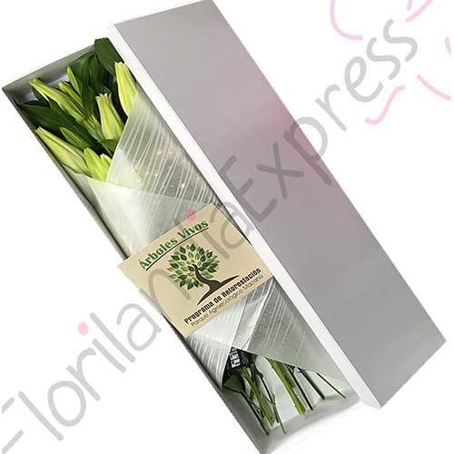 Imagen bonos de condolencias bogota arbol de vida florilandia floristeria