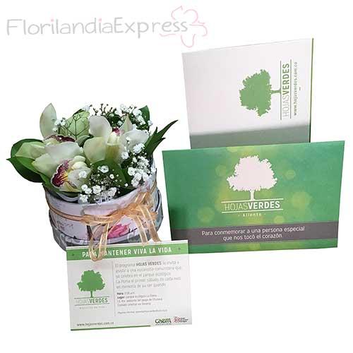 Imagen de Bono Hojas Verdes a Domicilio + Arreglo de orquídeas - Florilandia Floristería