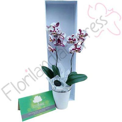 Imagen de Bonos de condolencias Hojas Verdes + Mata de Orquídea Bogotá - Florilandia Floristería