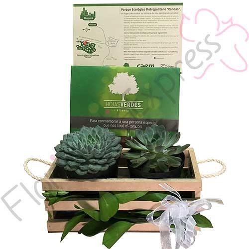 Imagen de Bono Hojas Verdes + Kit de Suculentas - Florilandia Express Floristería