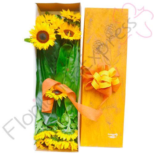 Imagen de Caja de girasoles brasil a domicilio Colombia - Floristería florilandia express