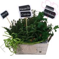 Imagen de Canasta de plantas aromáticas - Mejórate pronto ramos a domicilio en Bogotá - Floristerías Florilandia Express
