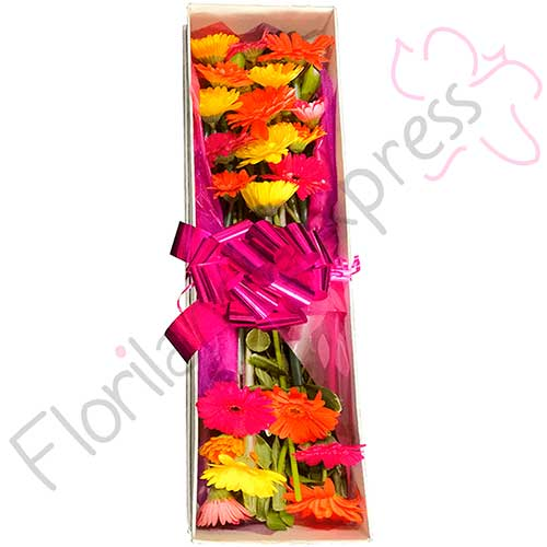Imagen regalos sorpresa amistad caja gerberas floristeria a domicilio florilandia