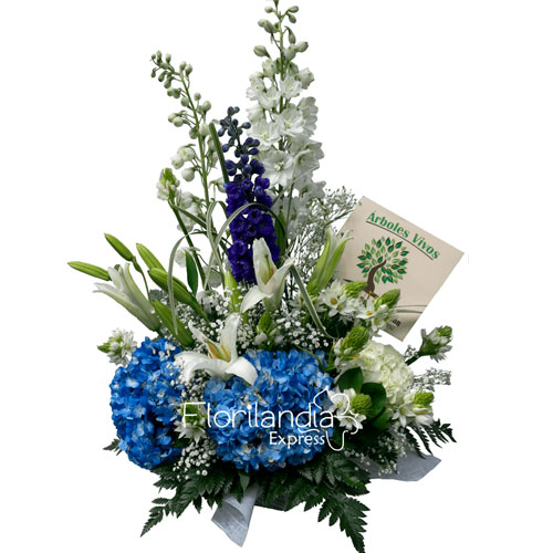 Imagen de Arreglo de condolencia lirios del campo - Floristería Florilandia Express - Flores fúnebres a domicilio