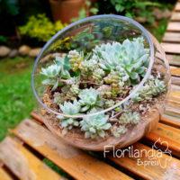 Imagen de Terrario con Mini-jardín de suculentas - Floristería Florilandia Express