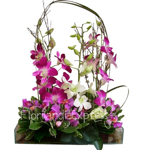 Imagen de Arreglo con orquídeas Hawai a domicilio en Bogotá Floristería Florilandia Express Colombia