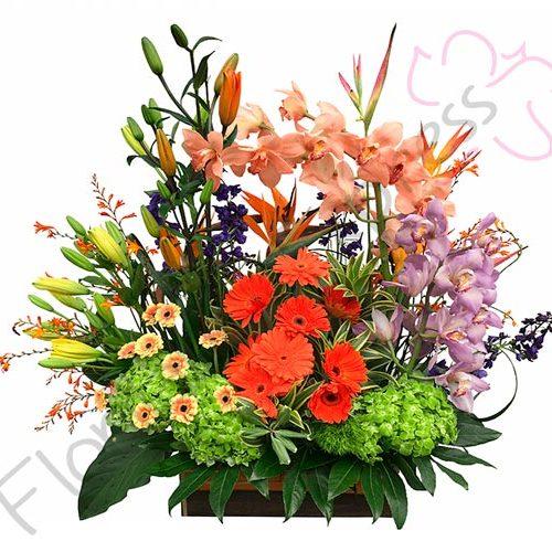 Imagen de Ramo de orquídeas alegría arreglos florales-a-domicilio florilandia express Colombia