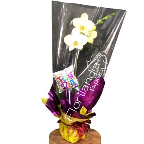 Hermosa mata de orquideas empacada con papeles regalo. Obsequio globo.